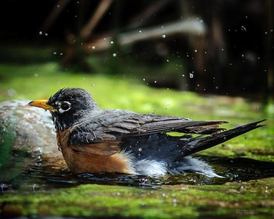 0028-Robin-Bath
