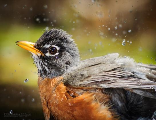 0101--Robin-Bath